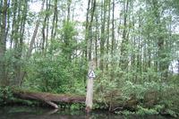 Wakenitz, km 5 westliches Ufer