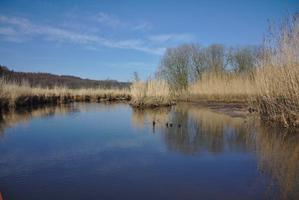 Sumpfiges Ufer an der Eider