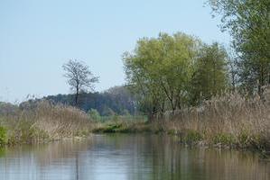 Sumpfwildnis bei Zaschendorf