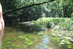 paddeln durch Warnow - Sumpfwald